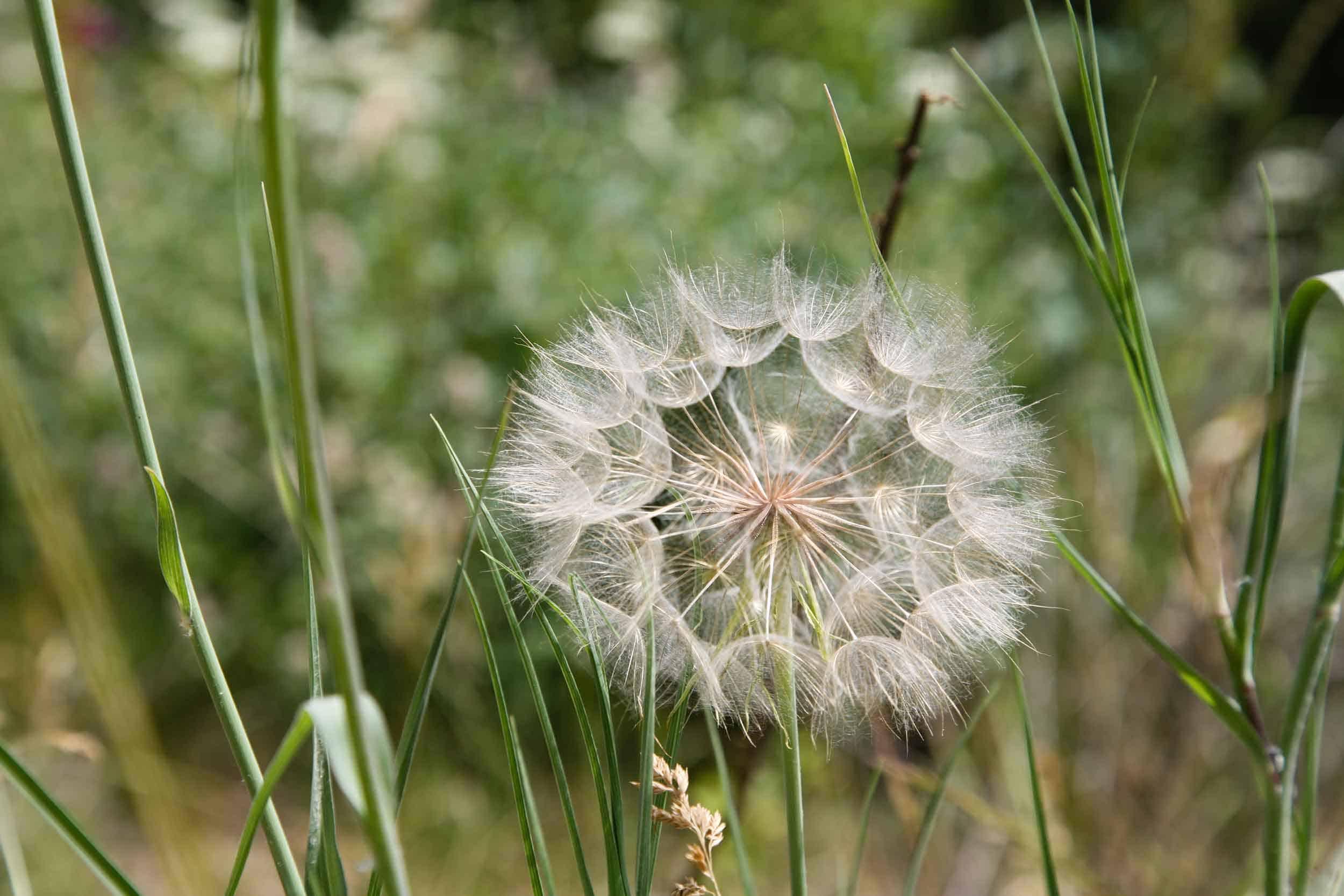 Allergien und Nahrungsmittelunverträglichkeiten