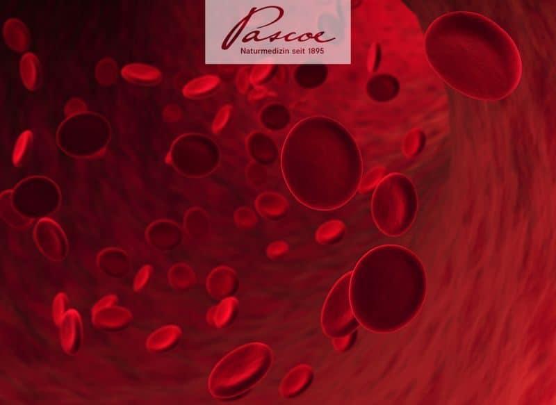Studie: Vitamin-C-Infusionen in Kombination mit Decitabin verlängern Lebenszeit bei Leukämie